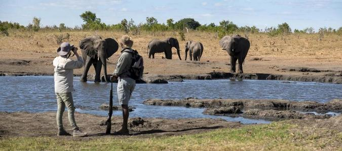 A guide and guest by a waterhole with elephants