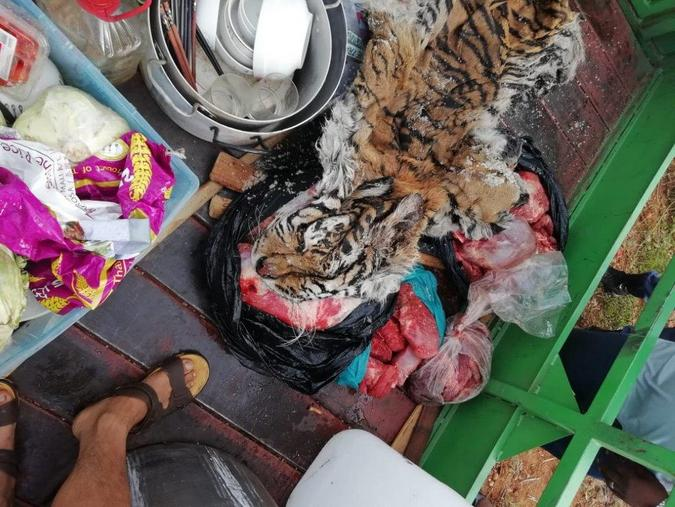 eight arrested for illegal possession of lion bones meat and tiger