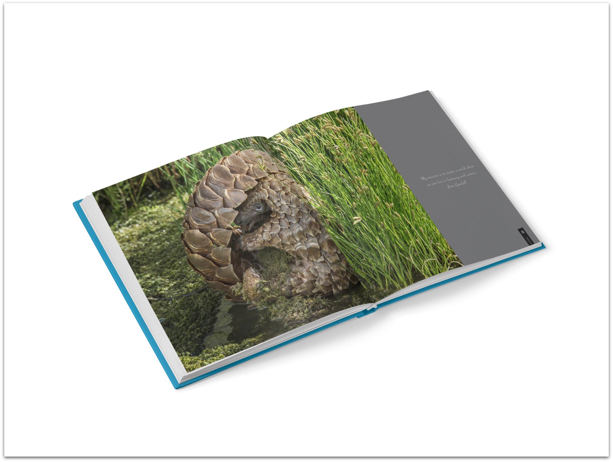 Pangolin book inside spread