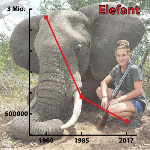 Statistics of elephant population, with hunter and dead elephant as background