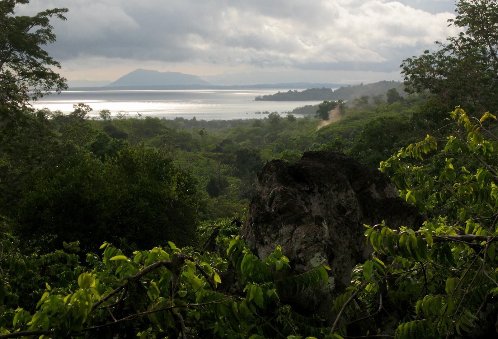 Tropical rainforest view in Madagascar