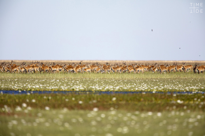 Antelope in Liuwa Plain