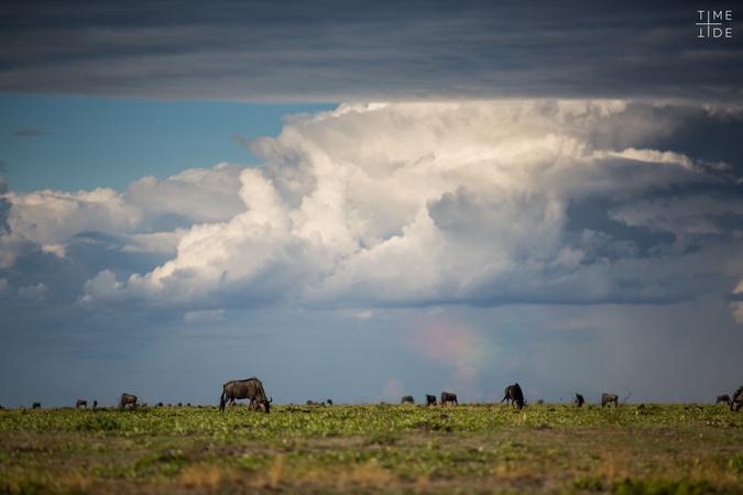 Liuwa Plain with wildebeest