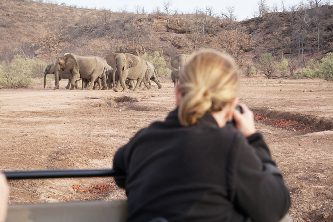 Taking photos of elephants from the vehicle