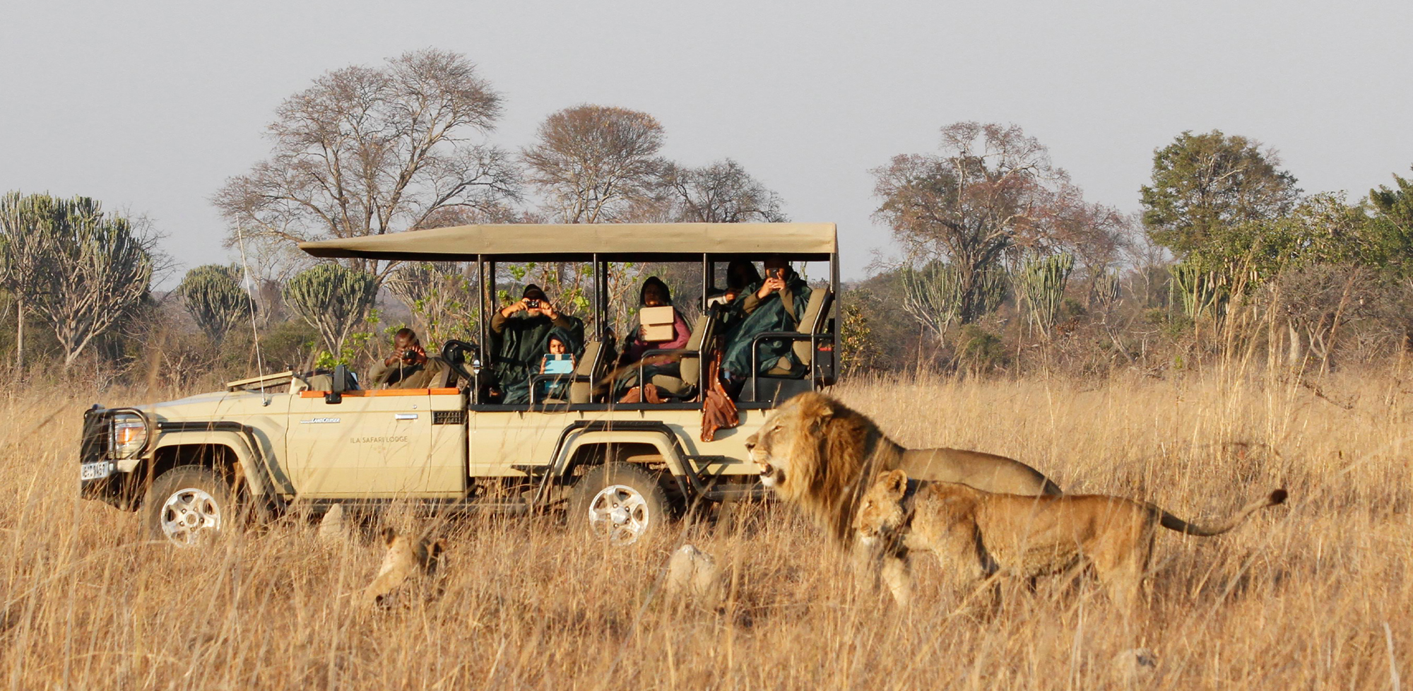 Guests watching lions from the vehicle in Zambia