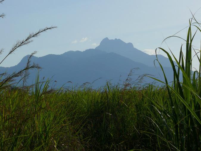 Mwanihana Peak from Magombera sugar plantation © Andrew Marshall