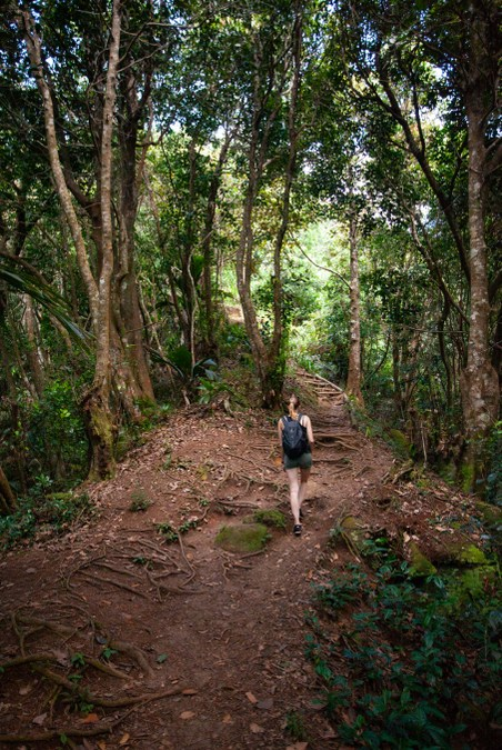 Trekking through the forests of Mahé in the Seychelles