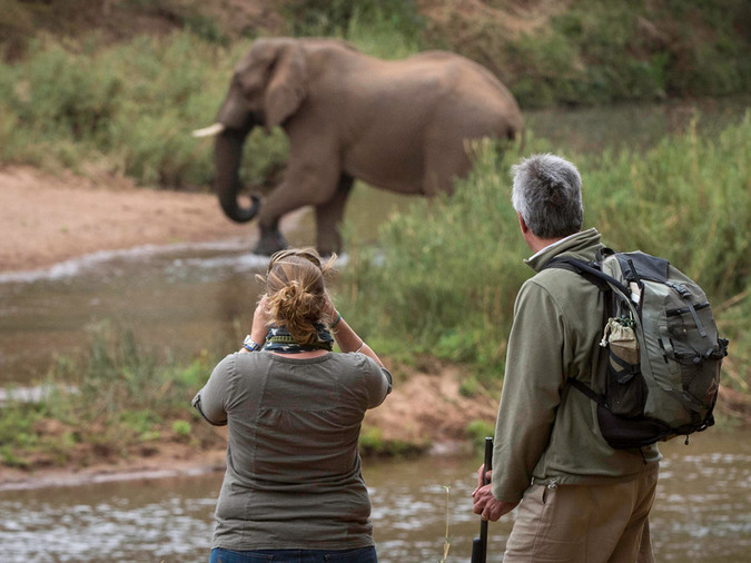 Elephant and guests on safari