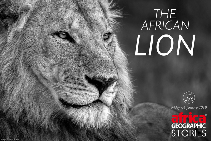 The African Lion Story cover
