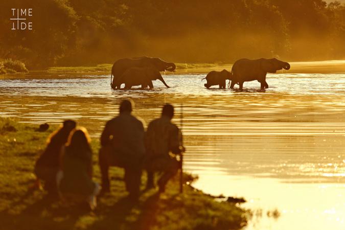 Guests watching elephants in river on walking safari, Zambia