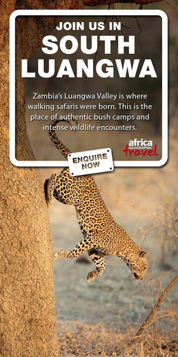 Affordable South Luangwa