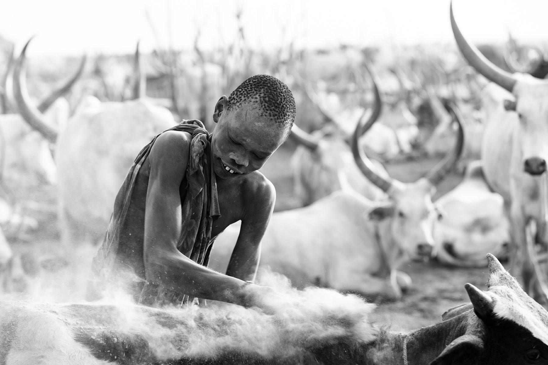 A Mundari boy rubs ash into the skin of his cow © Joe Buergi