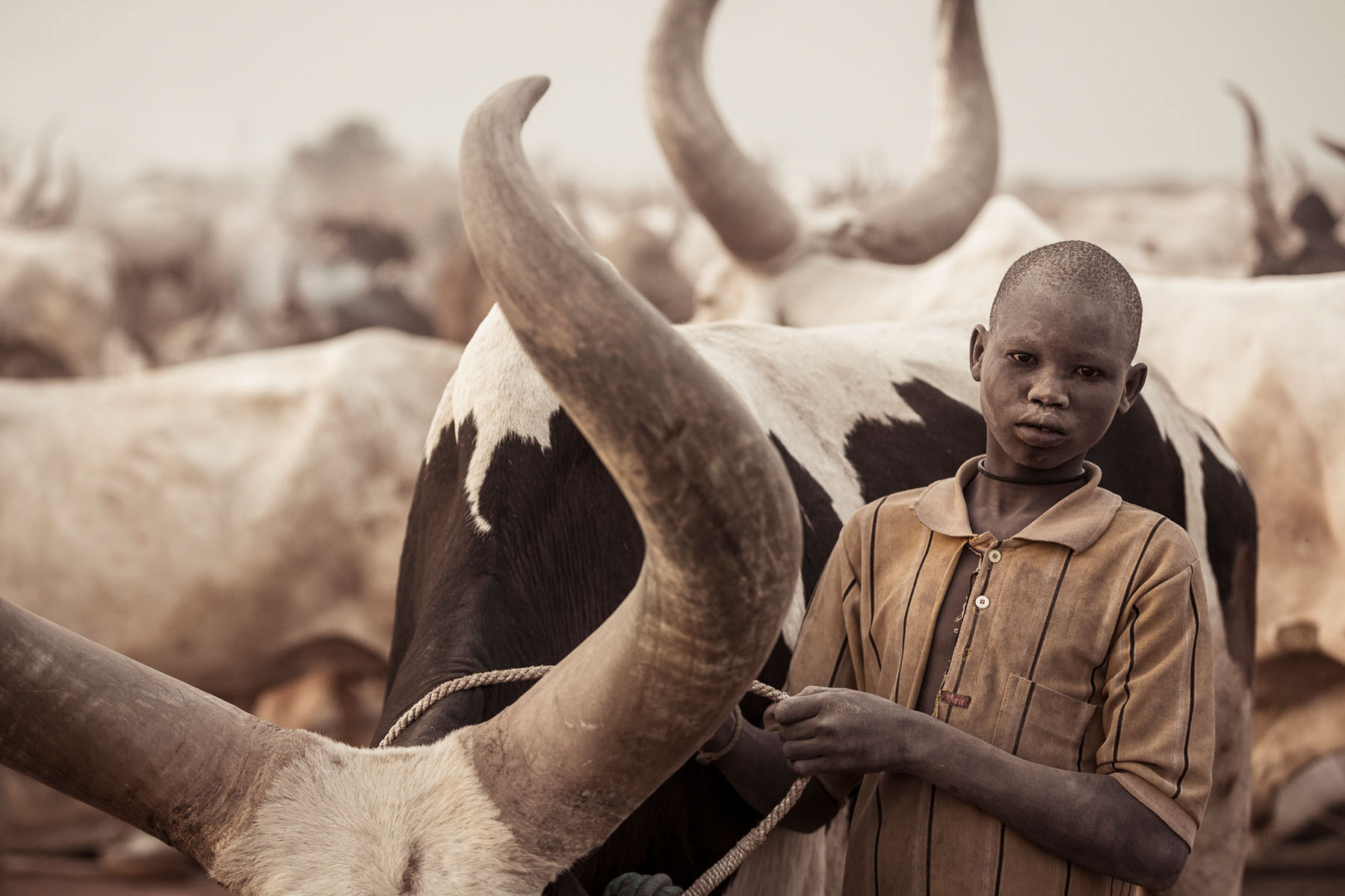 A young Mundari taking care of his cow © Joe Buergi