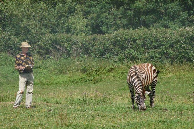 Professor Tim Caro observing zebra behaviour in response to biting fly annoyance