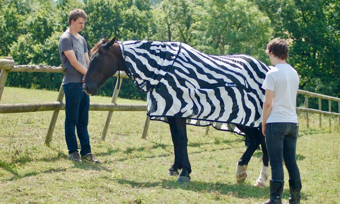 Researches with horse wearing zebra-striped coat