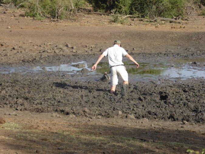 Ranger heading into muddy pan to rescue zebra