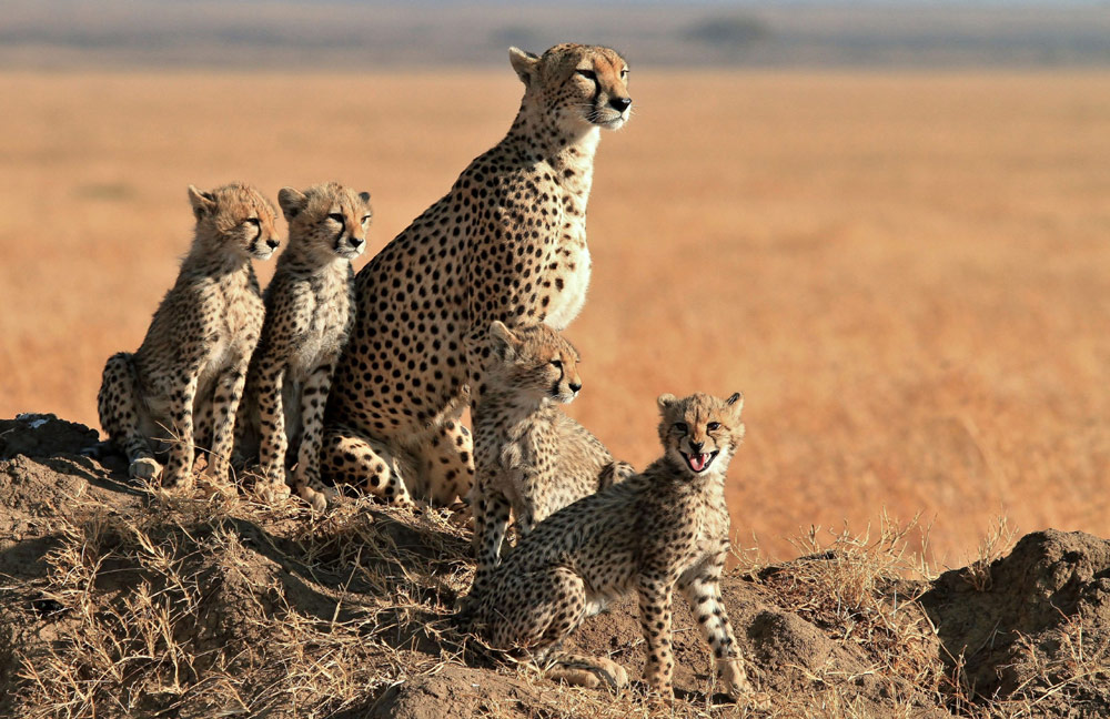 Game drive in Balule