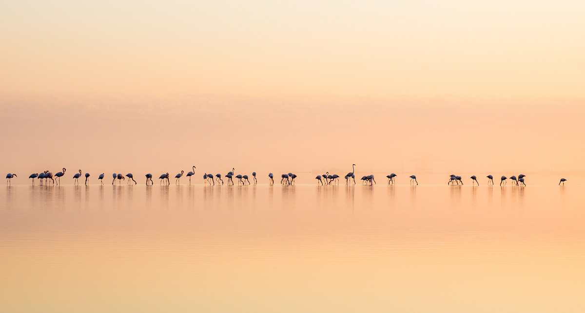 Flamingos at sunrise at a lagoon in Walvis Bay, Namibia © Beata Bettaglio Spengenberg