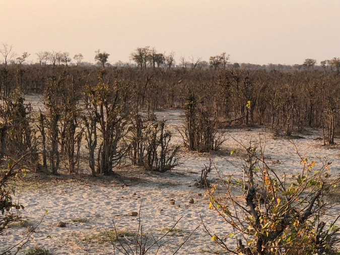 Vegetation destroyed by elephants