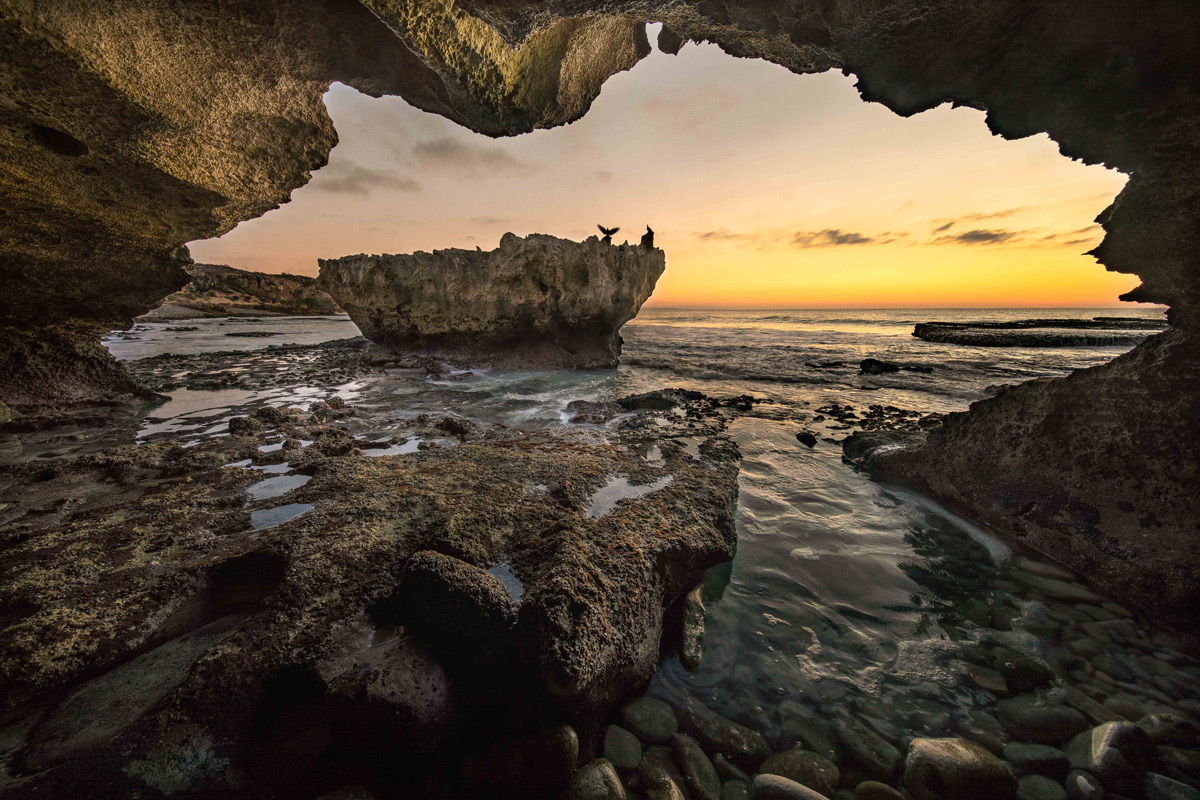 A rock pigeon open its wings to a new day in front of a cave at Arniston on the southern tip of Africa, South Africa © Gideon Malherbe