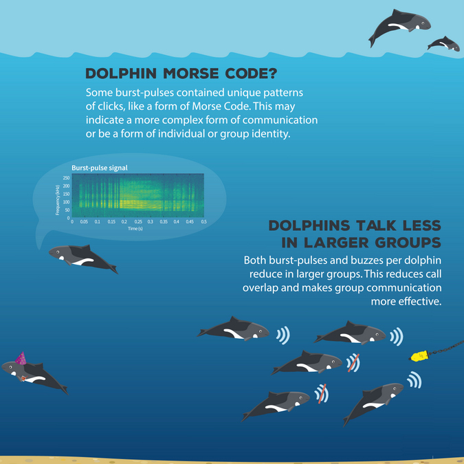 Infographic about Heaviside's dolphins