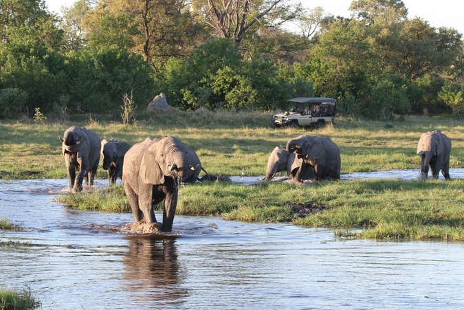Elephant herd by river with game drive vehicle