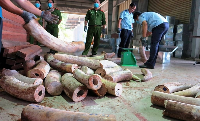 Customs officers in Da Nang unpack the seized ivory in Vietnam