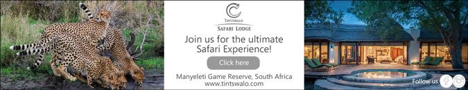 Tintswalo safari experience