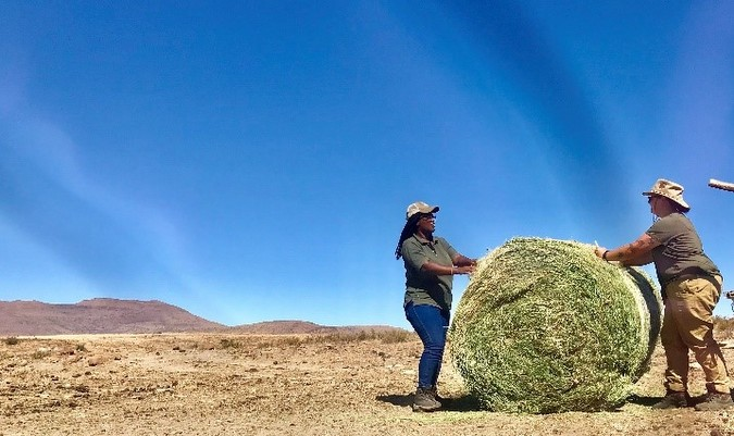 Lucerne bale in the Karoo