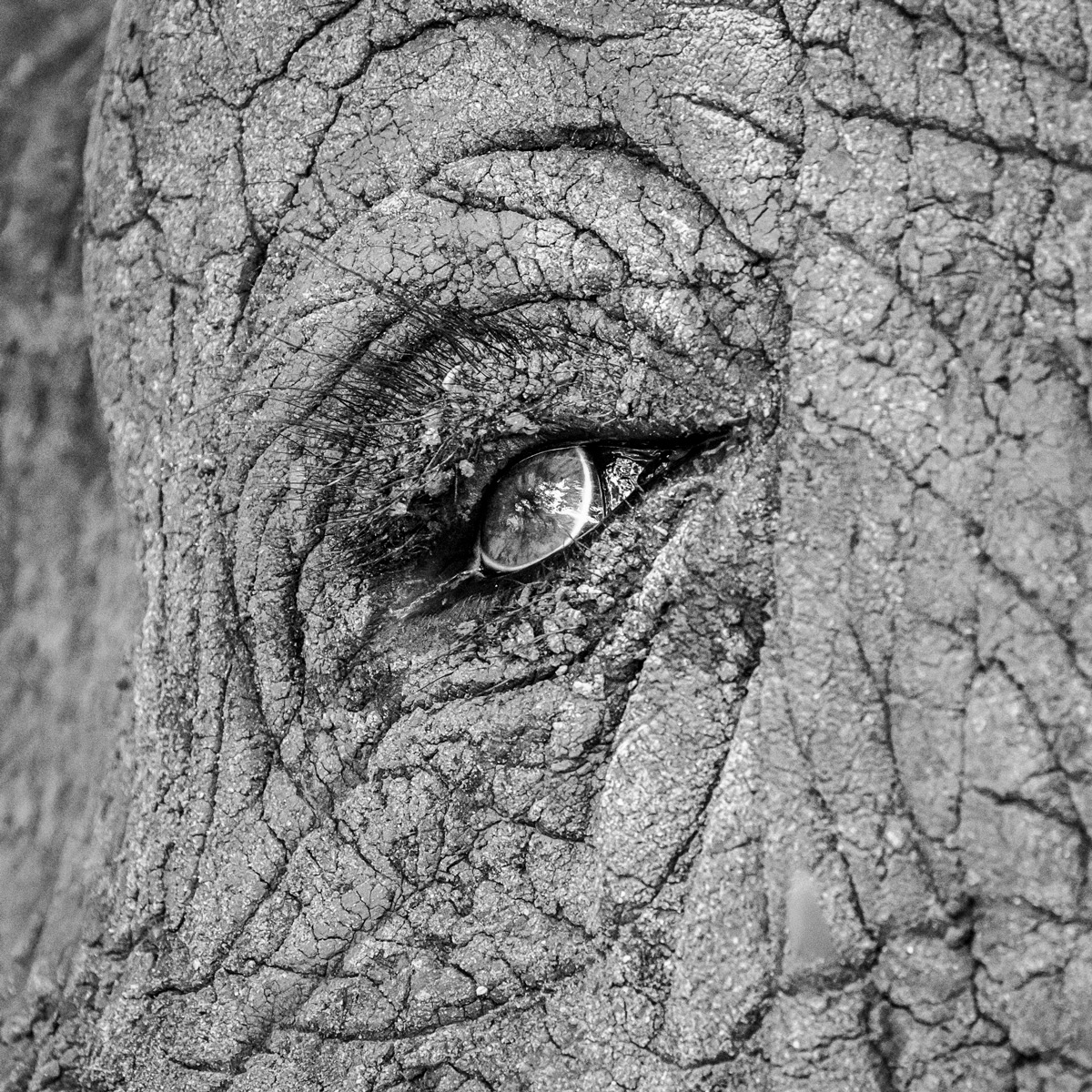 Close up of an elephant's eye in Kruger National Park, South Africa © Dirk Uys