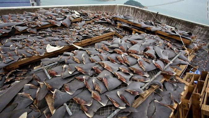 More shark fins