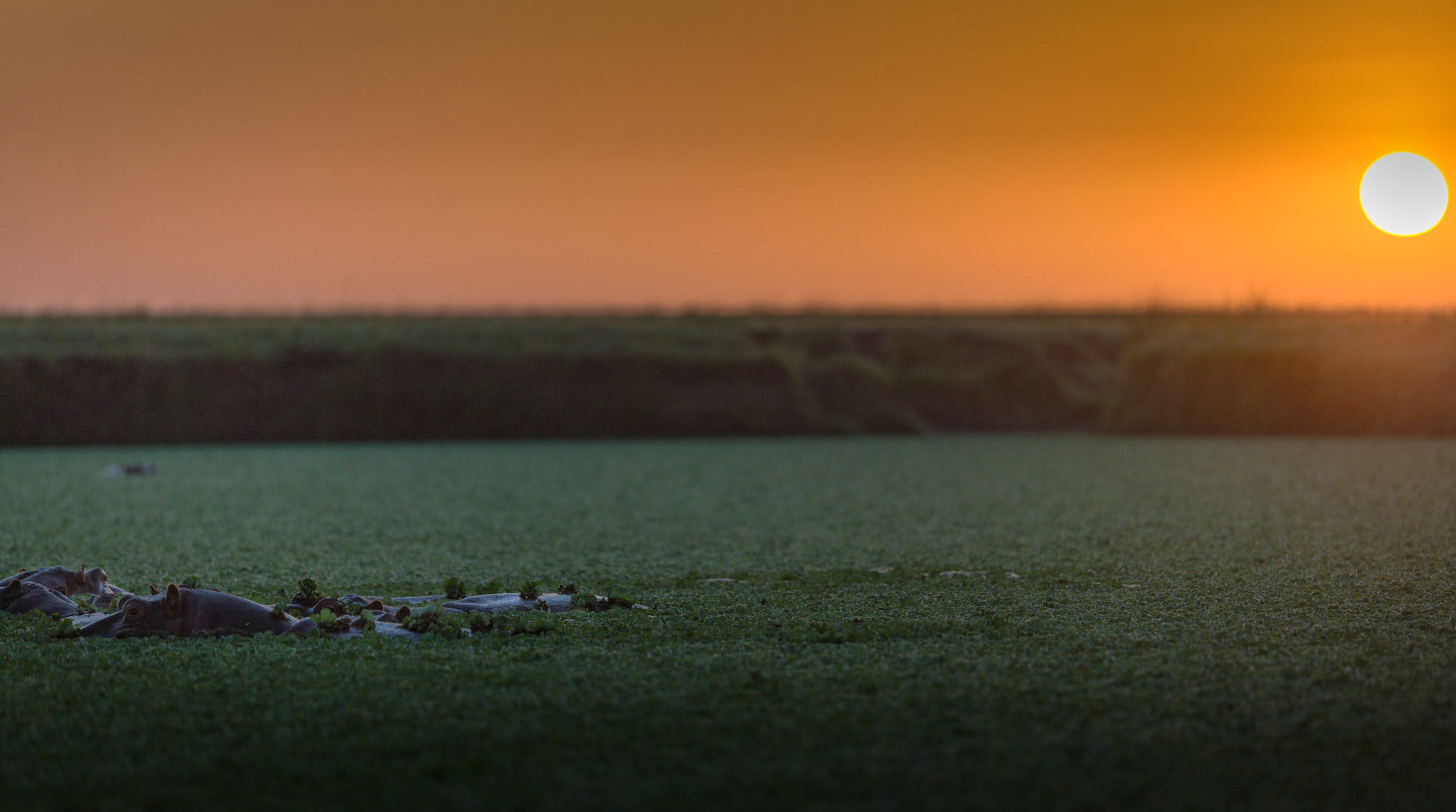 Maasai Mara A spectacular sunrise with hippos ©Ruzdi Ekenheim