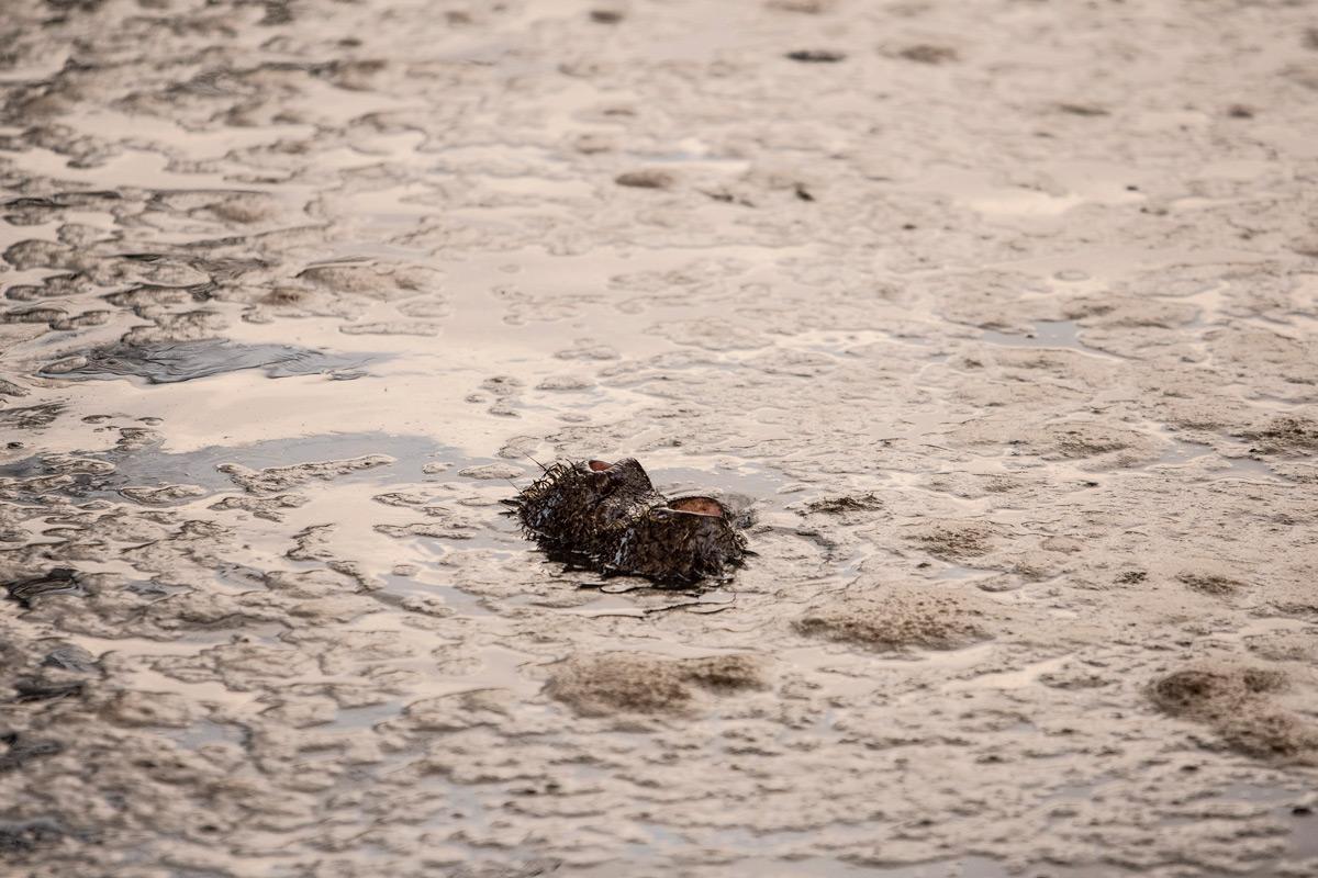The nostrils of a hippo in Maasai Mara National Reserve, Kenya © Michele Cabria