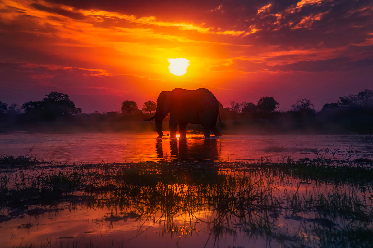 An elephant is bathed in stunning shades of vibrant colours in Khwai Concession, Botswana © Panos Laskarakis