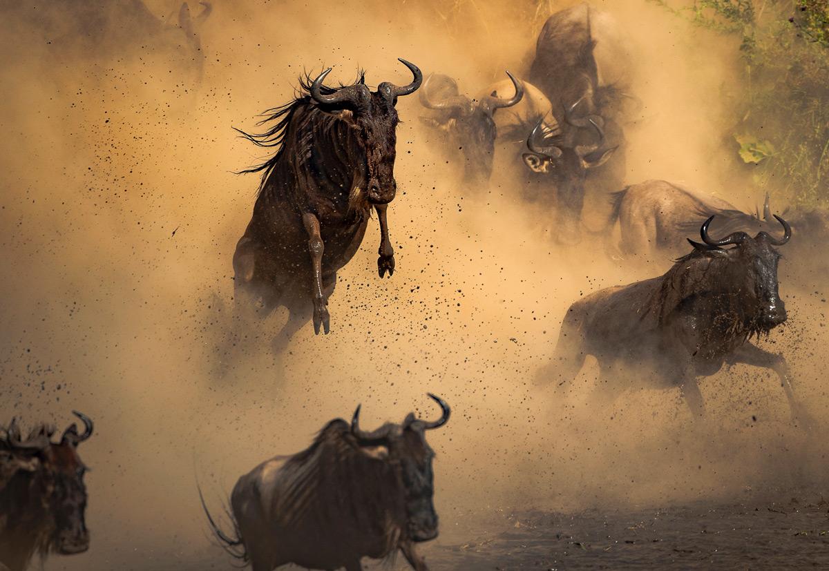 """Leap of faith"" – wildebeests cross the Mara River in Serengeti National Park, Tanzania © Simone Basini"