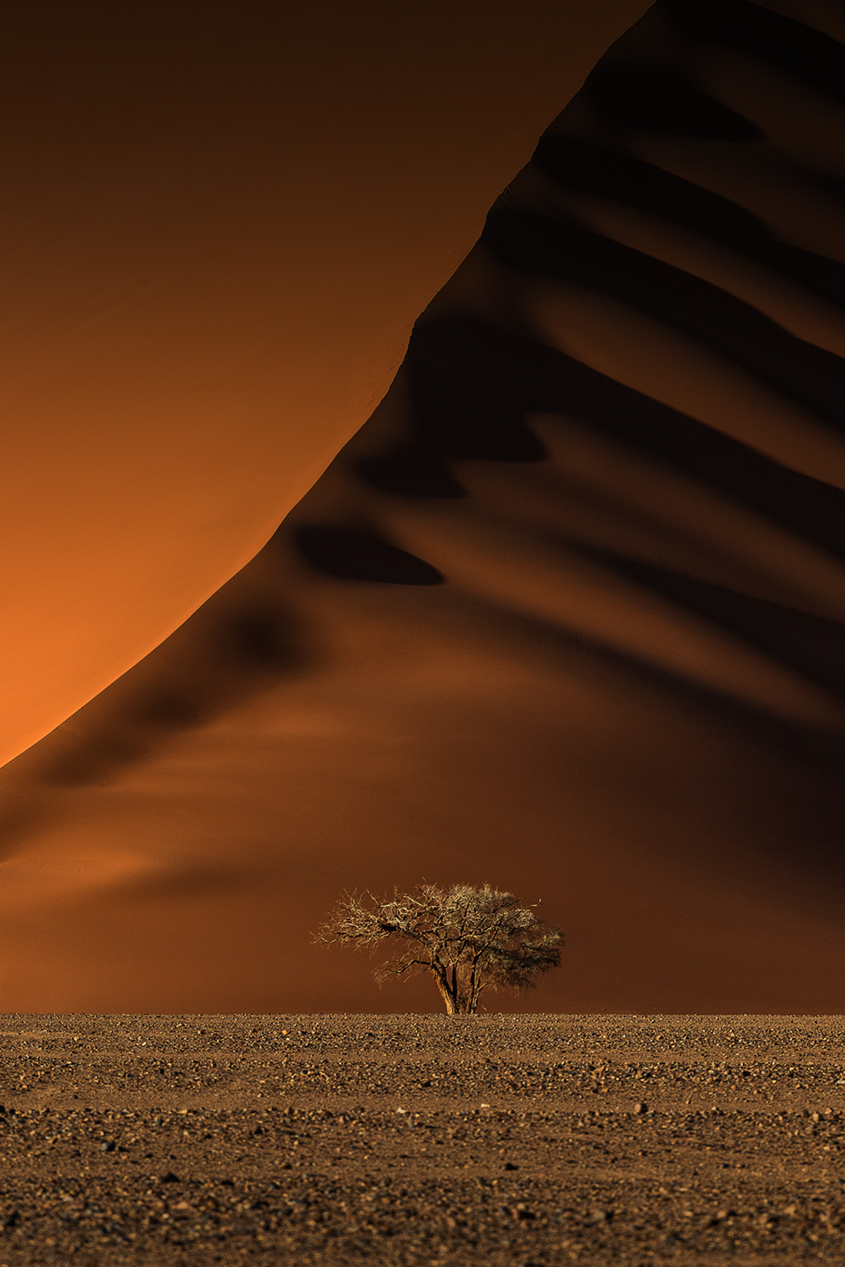 """""""Lone camelthorn"""" – a lone camelthorn tree stands proudly in front of a massive red dune in the Tsauchab Valley, Namib-Naukluft Park, Namibia © Xenia Ivanoff-Erb"""