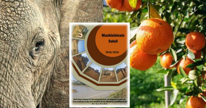 Elephant and citrus farm collage