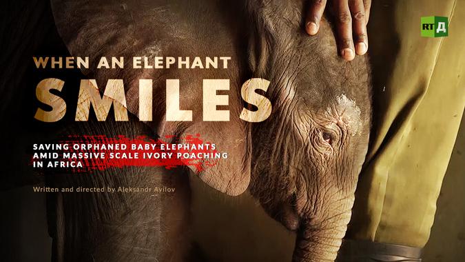 When an elephant smiles, wildlife documentary