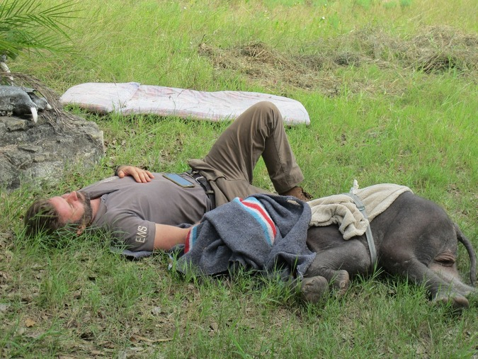 Three-month-old elephant calf resting, rescued in Maputo Special Reserve, Mozambique
