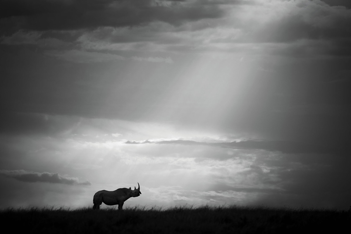 """""""A sun pillar breaks through the clouds from above and almost points at the rhino as the chosen one."""" – Maasai Mara National Reserve, Kenya © Björn Persson"""