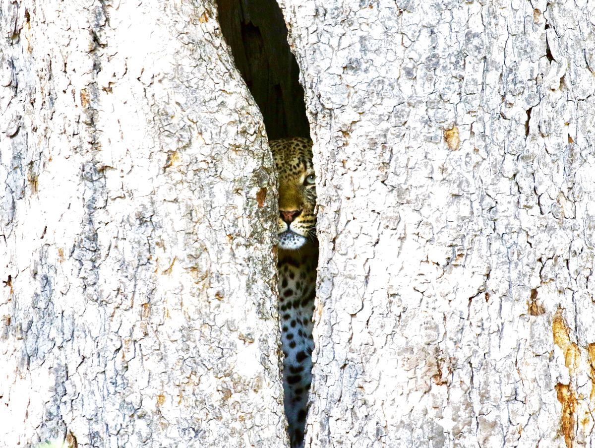 """Watching me, watching you"" – Okavango Delta, Botswana © Clare Doolan"