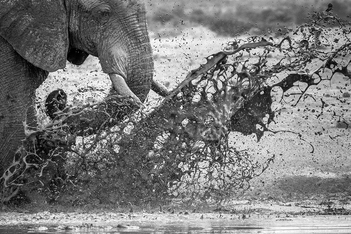 An elephant bull kicks up the mud with his feet while standing in a waterhole in Nxai Pan National Park, Botswana © Fred von Winckelmann