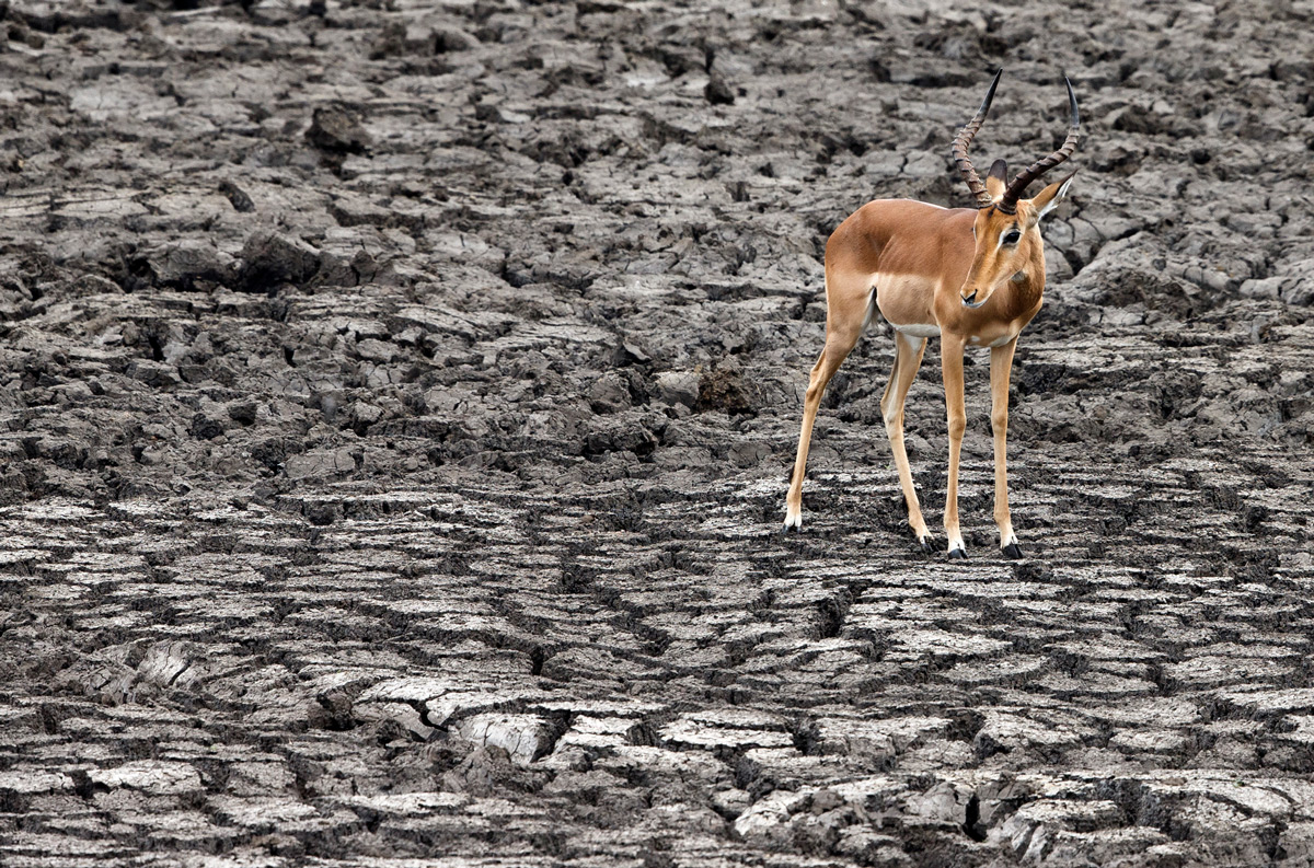 The dry season in Kruger National Park, South Africa © Hilda le Roux