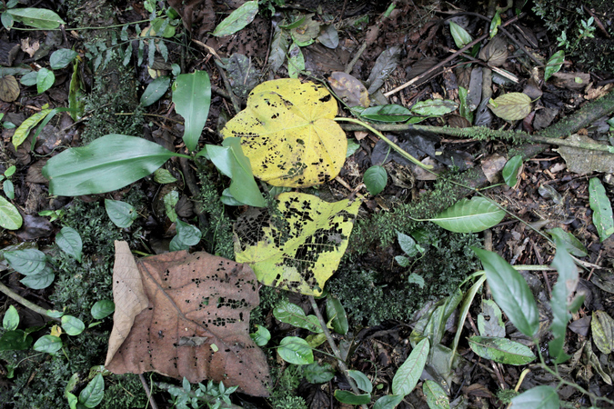 Leaf litter on the ground in Taita Hills forest in Kenya