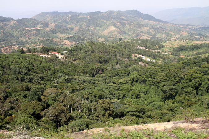 Ngangao Forest, Taita Hills, Kenya