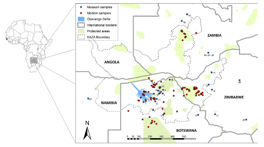 Map of Kavango–Zambezi region showing sampling distribution of modern lion samples and museum samples