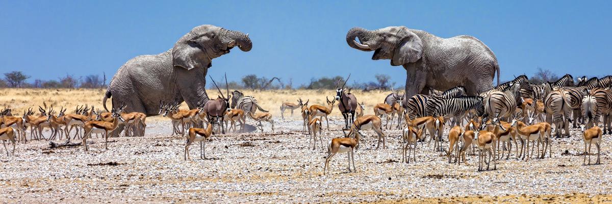A busy waterhole in Etosha National Park, Namibia © Matt Hofman