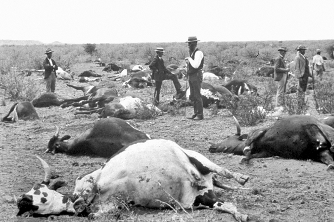 Rinderpest outbreak in 1896 in South Africa, which killed large numbers of cattle and cloven-hoofed wildlife