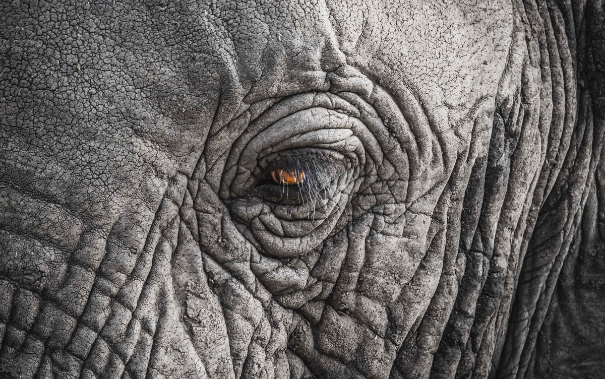 """Wise eye"" – an elephant up close in Lake Manyara National Park, Tanzania © Serkan Hussein"