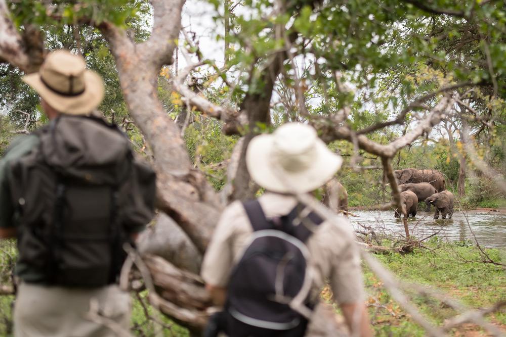 Watching Balule elephants from a safe distance © Em Gatland